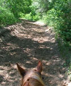 Luke on trail