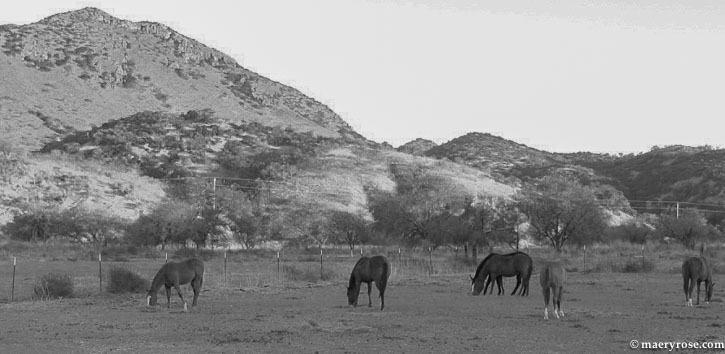 horses in Arizona