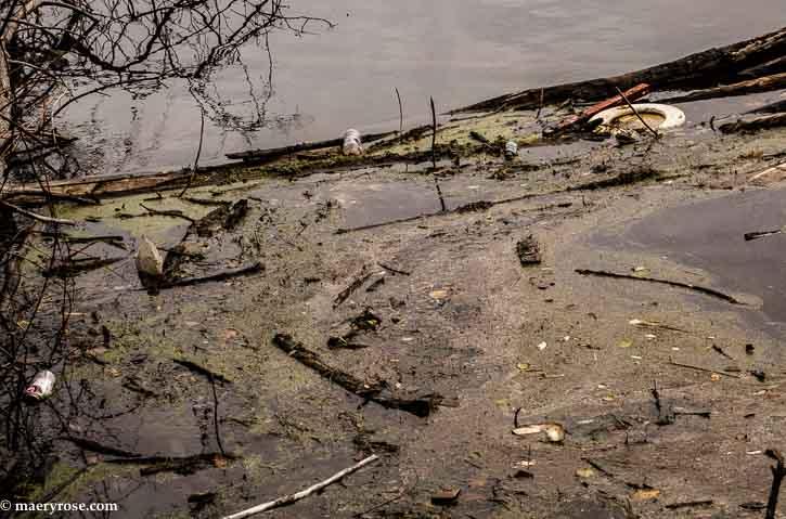 Mississippi River pollution