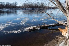 Winter view of the Mississippi River