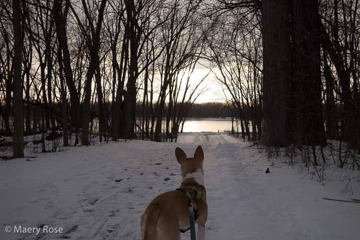 dog walk by river