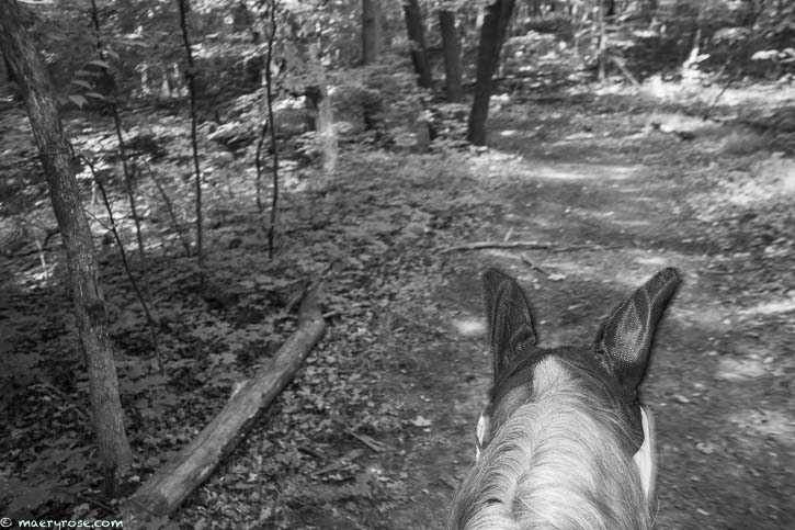horse trail riding