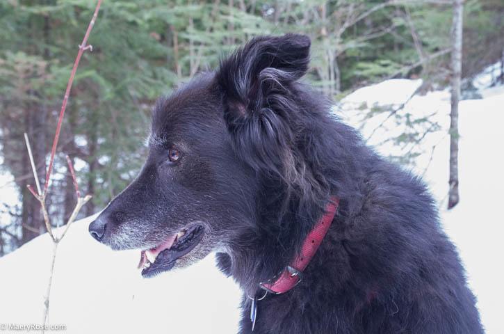 dog walk Gunflint Trail