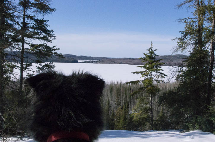 dog on Gunflint Trail